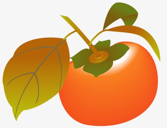 persimmon, Tomato, Red Persimmon, Hand Drawn Tomato PNG Image and Clipart