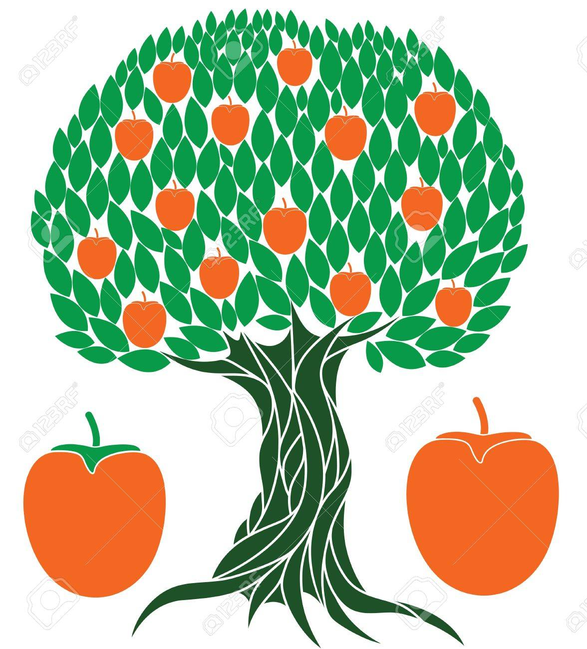 Persimmon tree illustration Stock Vector - 33203054