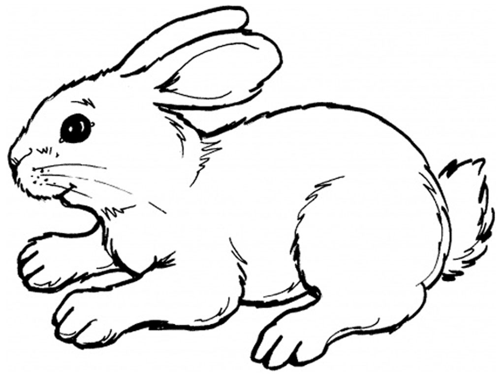Peter Rabbit Clip Art - Rabbit Clip Art