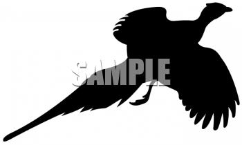Pheasant Clipart-pheasant clipart-7