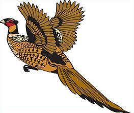 Pheasant-Pheasant-18