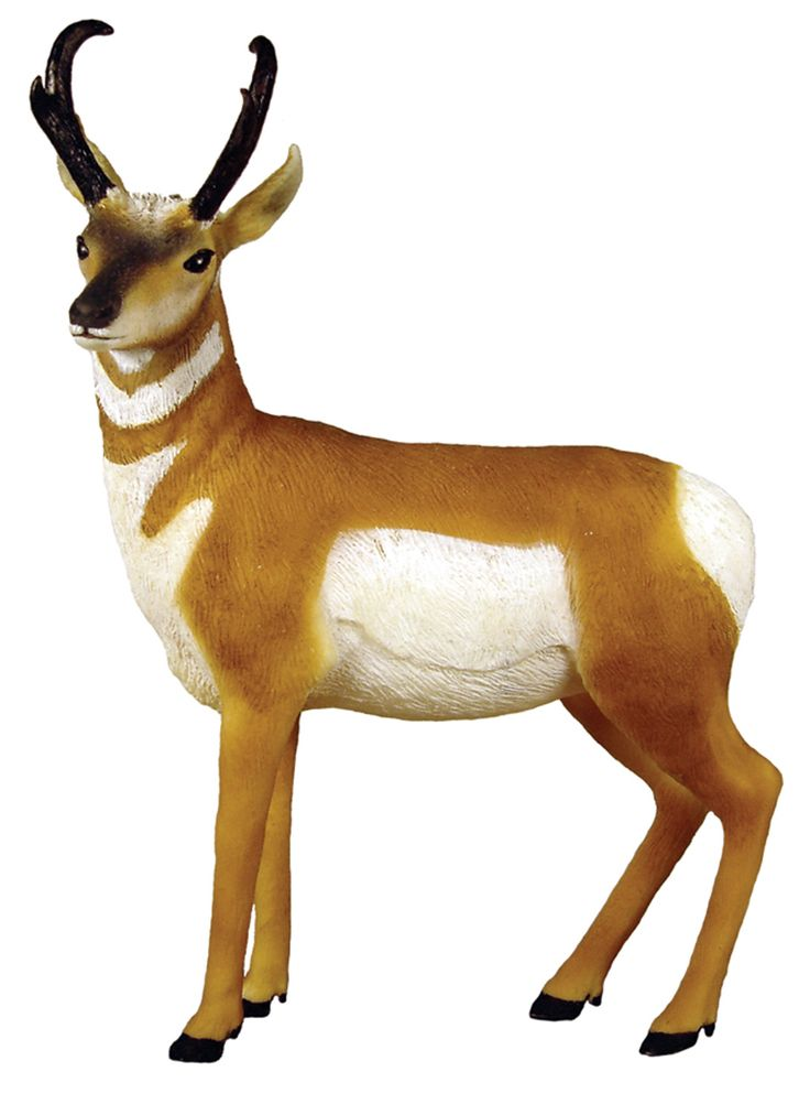Pics For U0026gt; Pronghorn Antelope .-Pics For u0026gt; Pronghorn Antelope .-17