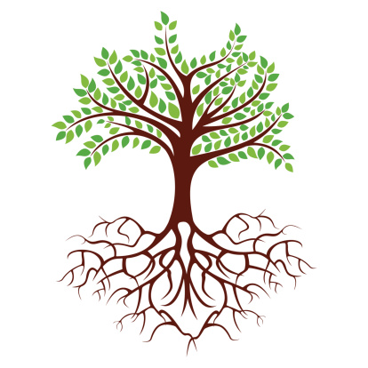 Picture Of A Tree With Roots - Tree Roots Clipart