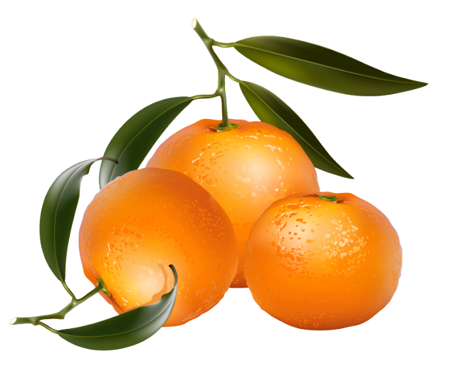 Pictures Of Oranges Free Download Clip A-Pictures of oranges free download clip art on-16