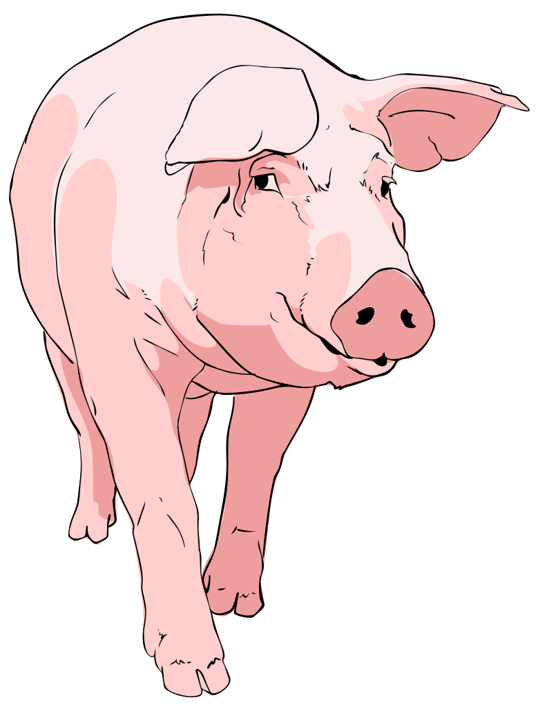 Pig Clipart Pig Clipart-Pig Clipart Pig Clipart-12