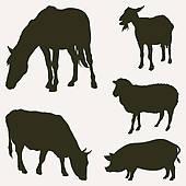 Pig running · Farm animals