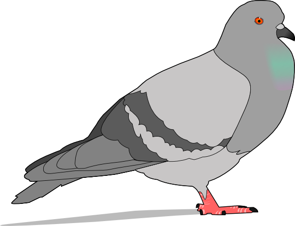 Pigeon Clip Art-Pigeon Clip Art-3