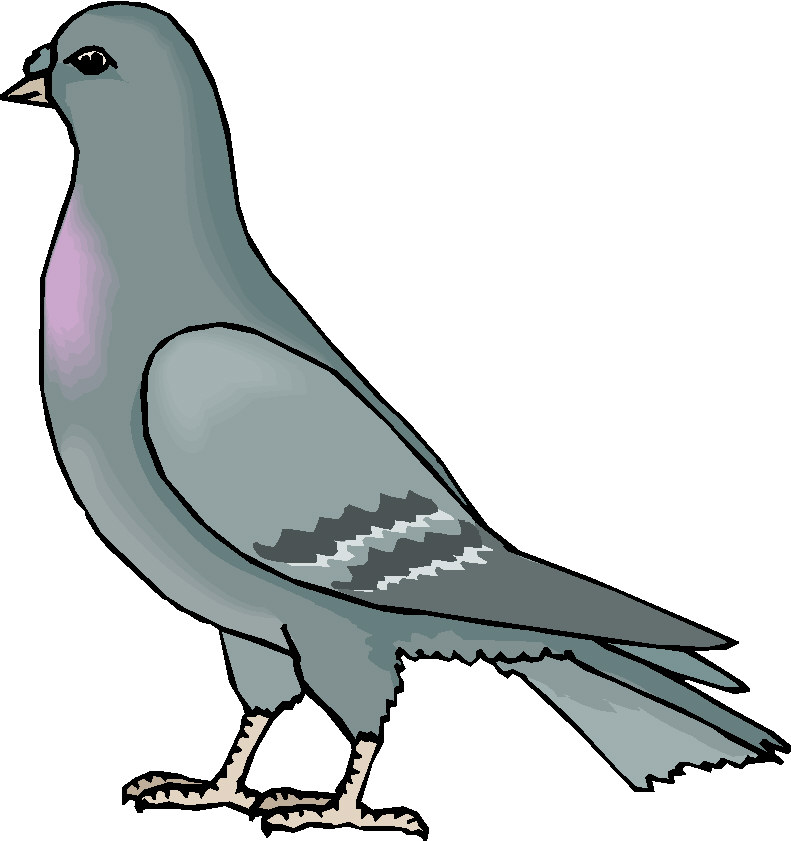 Pigeon Clipart
