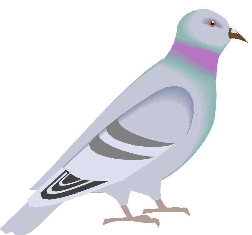 Pigeons clip art-Pigeons clip art-7