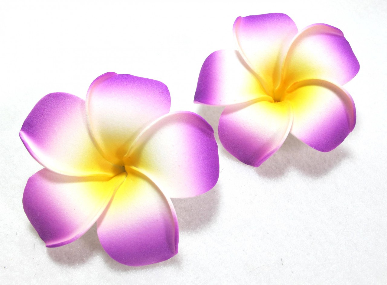Pin Plumeria Flower Clip Art ..