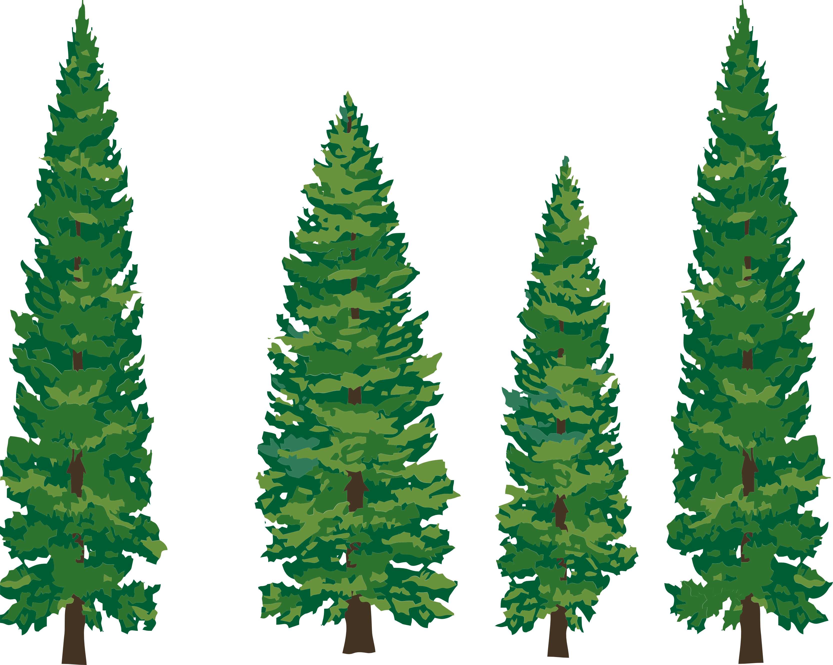 Pine Clipart-pine clipart-6
