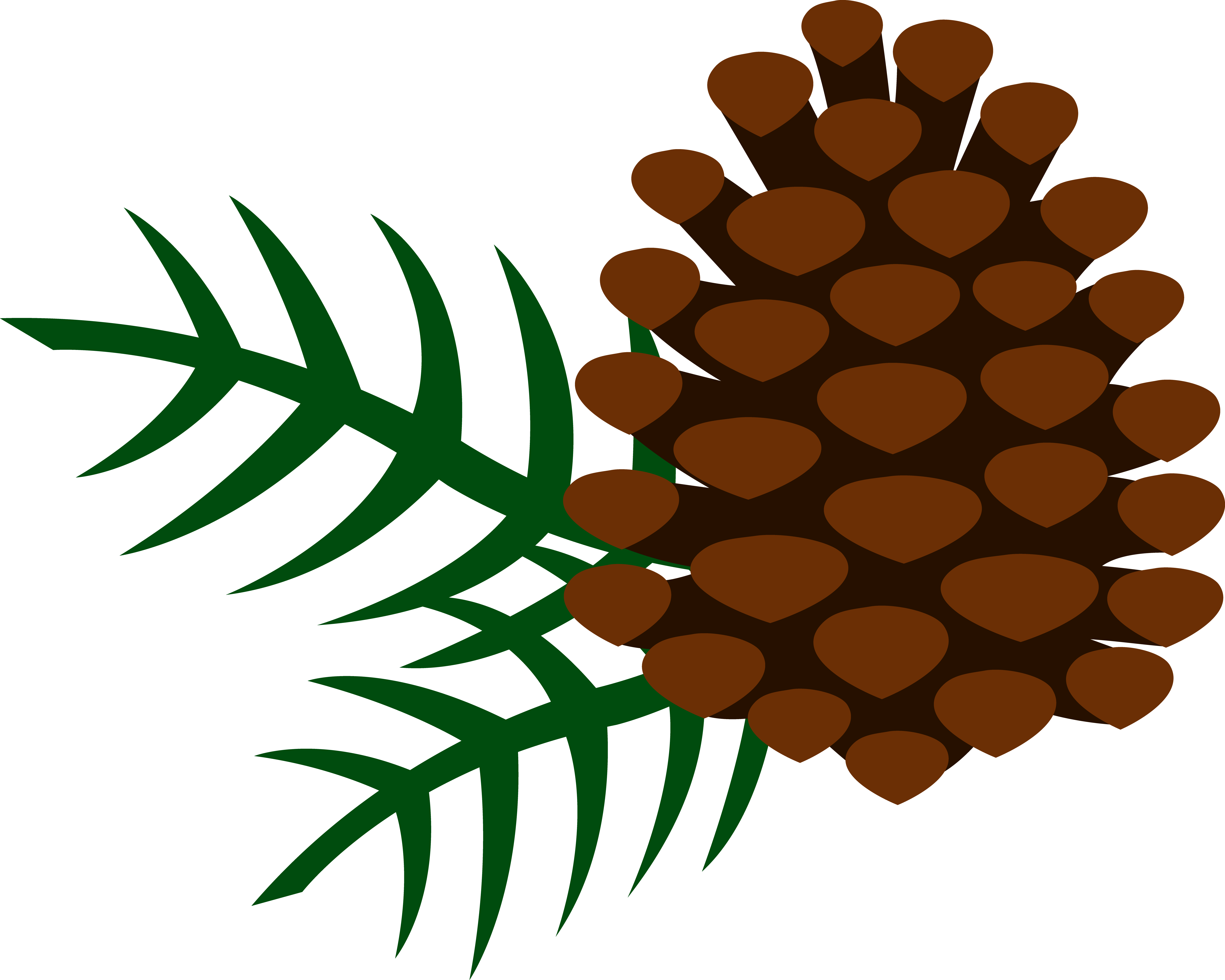 pine clipart