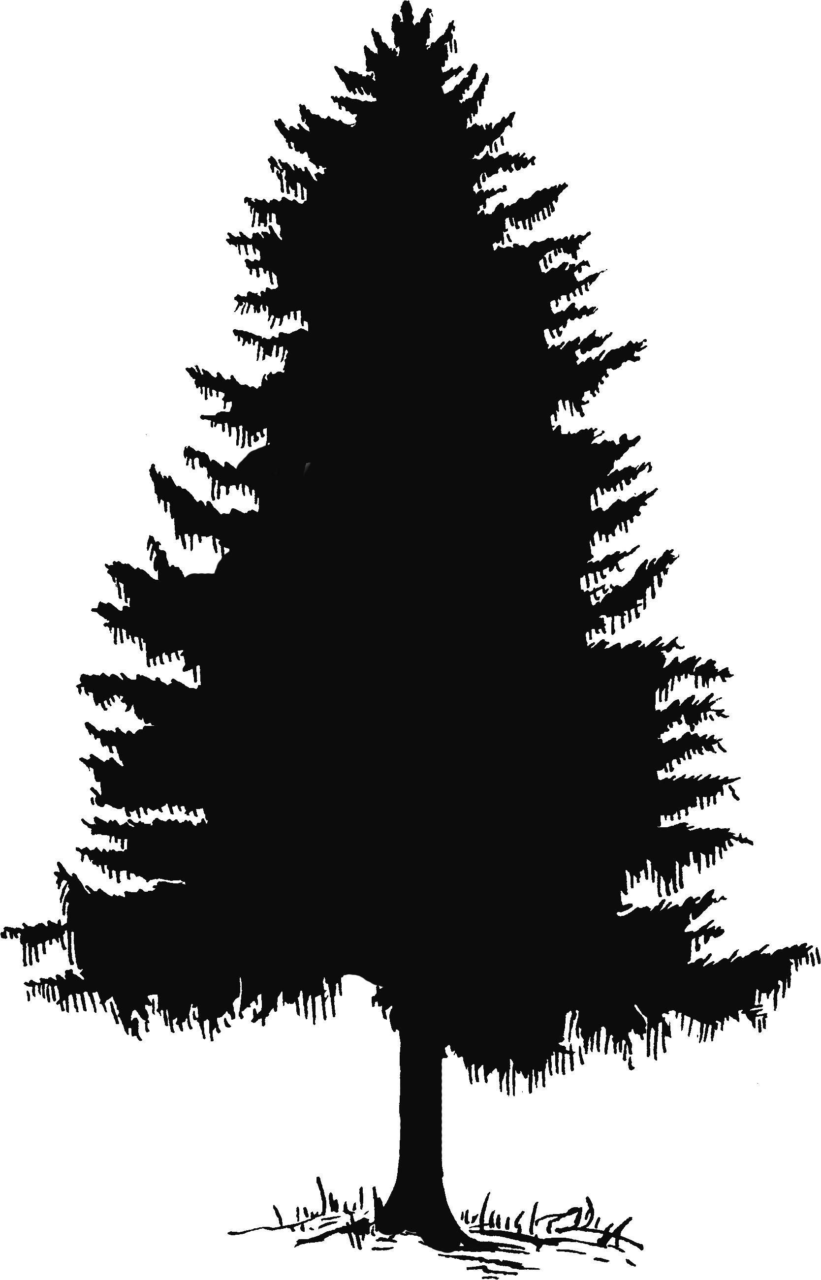 Pine Tree Clip Art-Pine Tree Clip Art-4