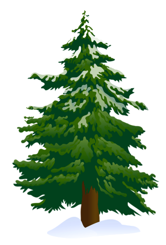 Pine Trees Pictures-Pine Trees Pictures-14
