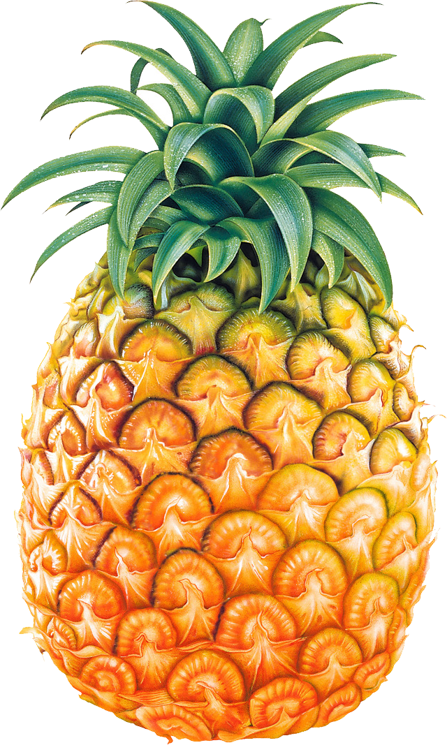 Pineapple Images Free Pictures Download -Pineapple images free pictures download clip art-15
