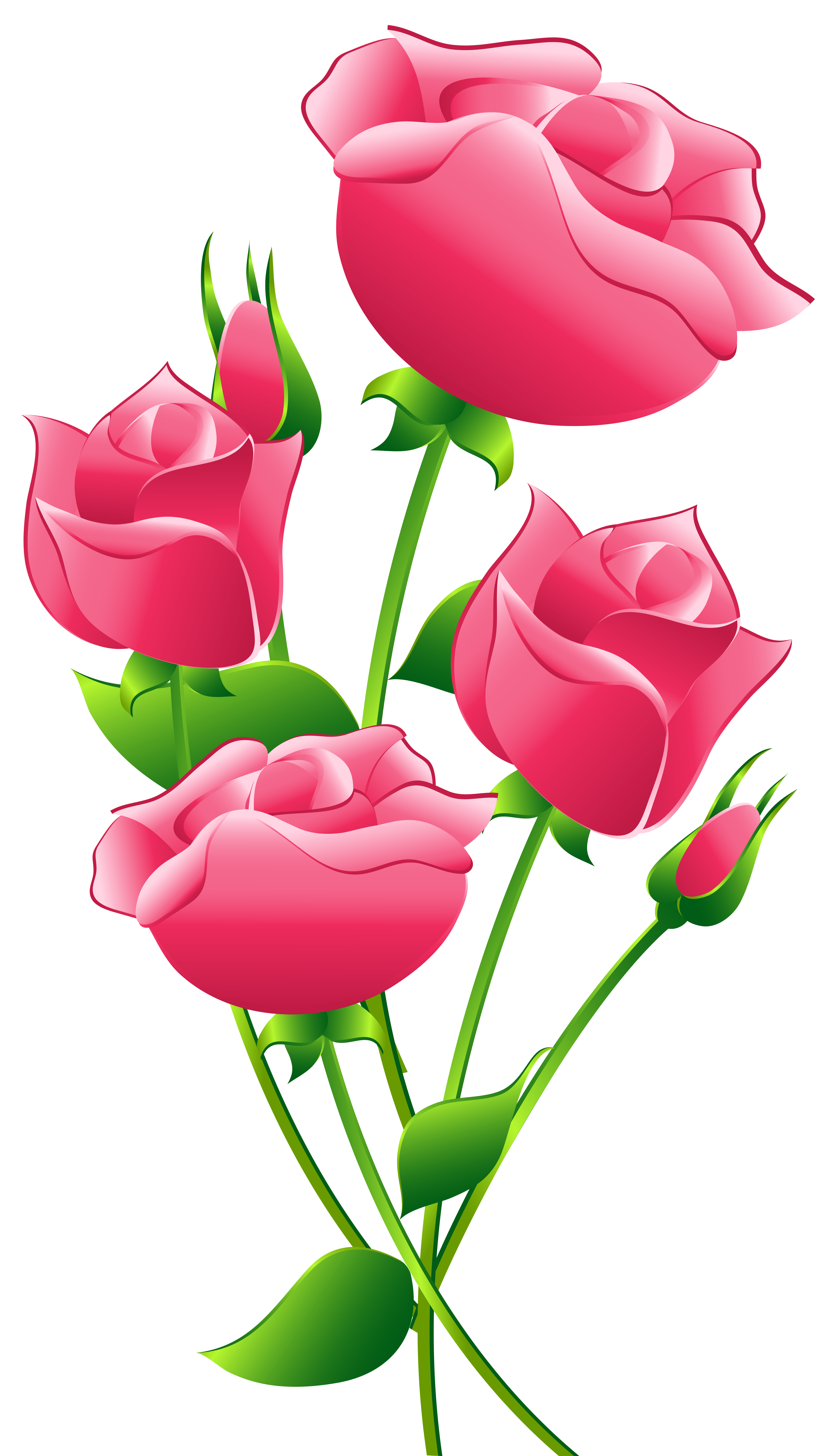 Pink roses transparent clip .