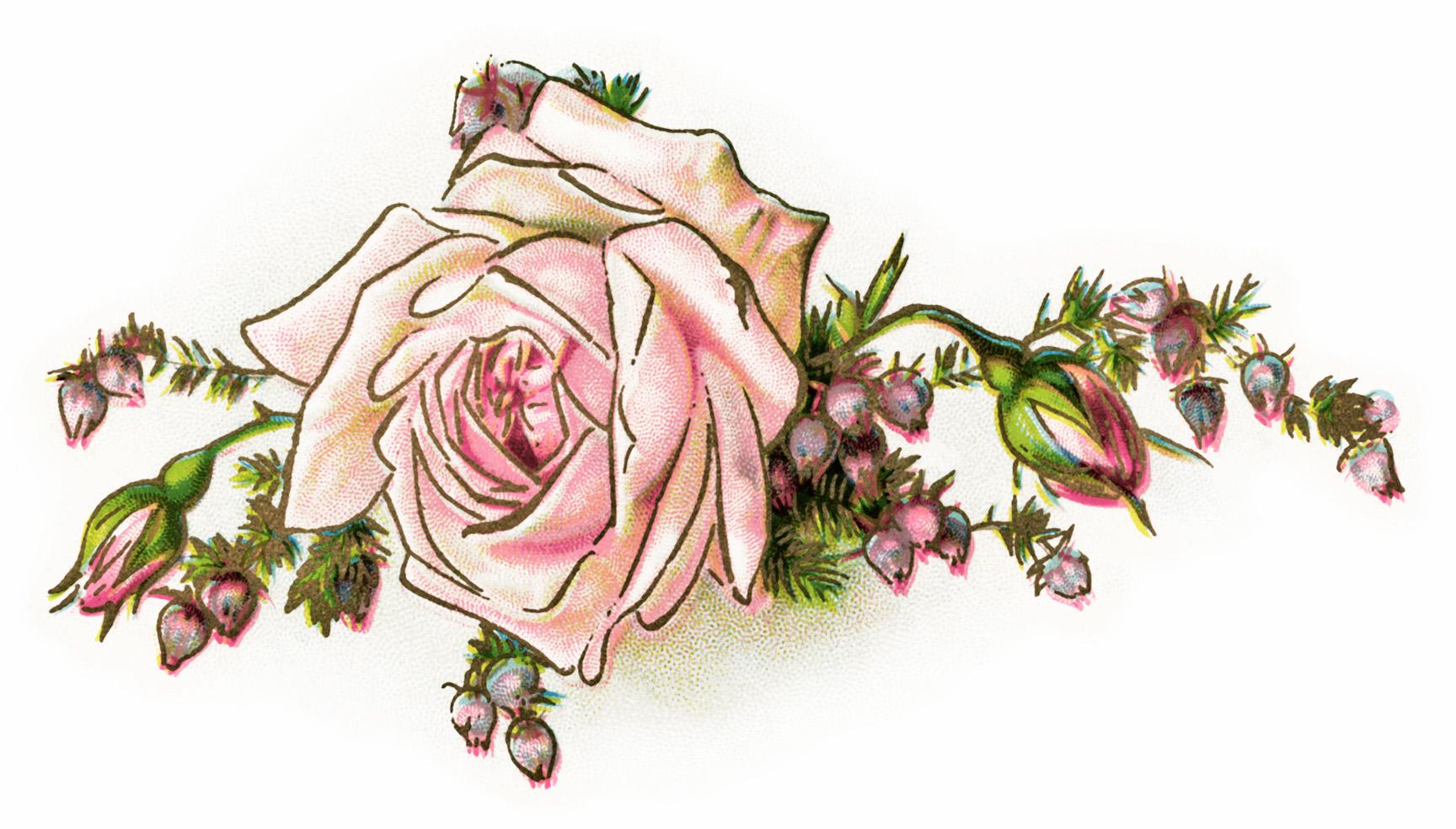 Pink Vintage Floral Clipart Cliparthut Free Clipart
