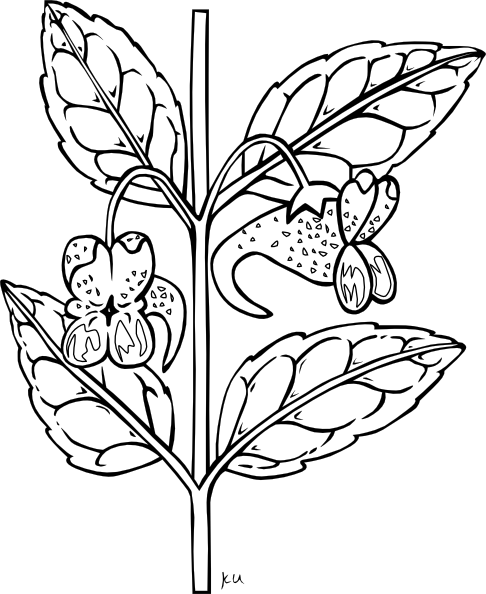 Plant Clipart Black And White-plant clipart black and white-11