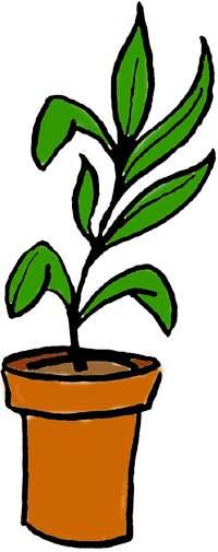 Plant Clipart-plant clipart-7