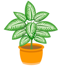 Dieffenbachia Plant N Planter Clipart Size: 166 Kb