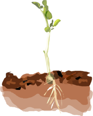 Plant in Soil Clip Art