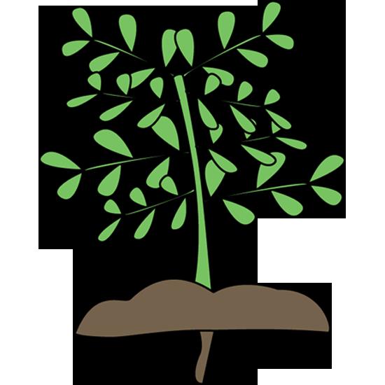 Plant nursery clipart ...