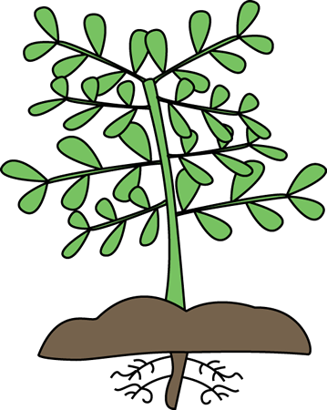 Plant With Roots-Plant with Roots-14