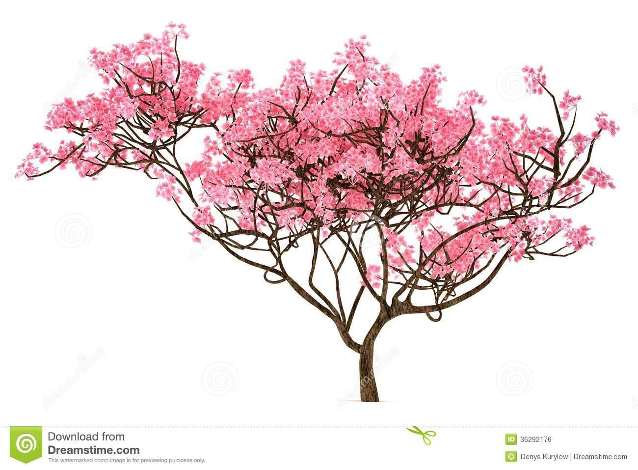 Plum Blossom Tree Clip Art. Sakura tree isolated Royalty .