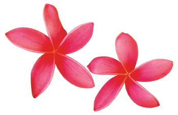 Plumeria Clipart - ClipArt .-Plumeria Clipart - ClipArt .-5