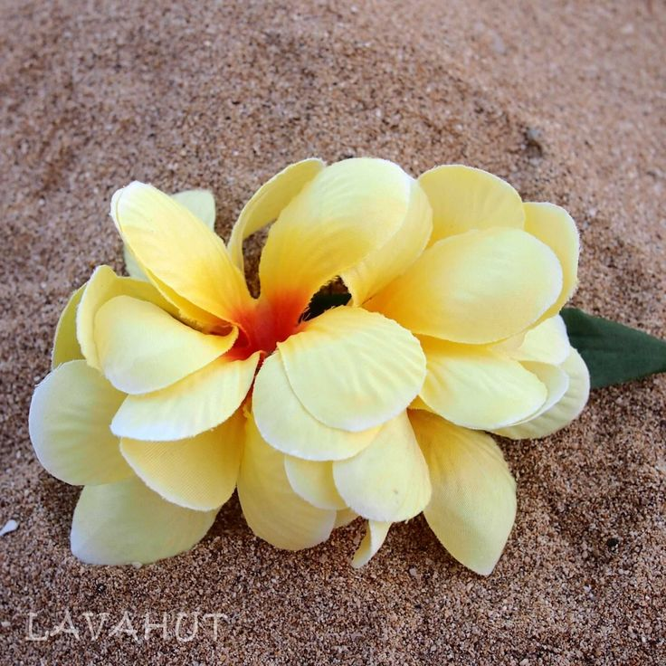 Plumeria Yellow Hawaiian Flower Hair Cli-Plumeria Yellow Hawaiian Flower Hair Clip-17