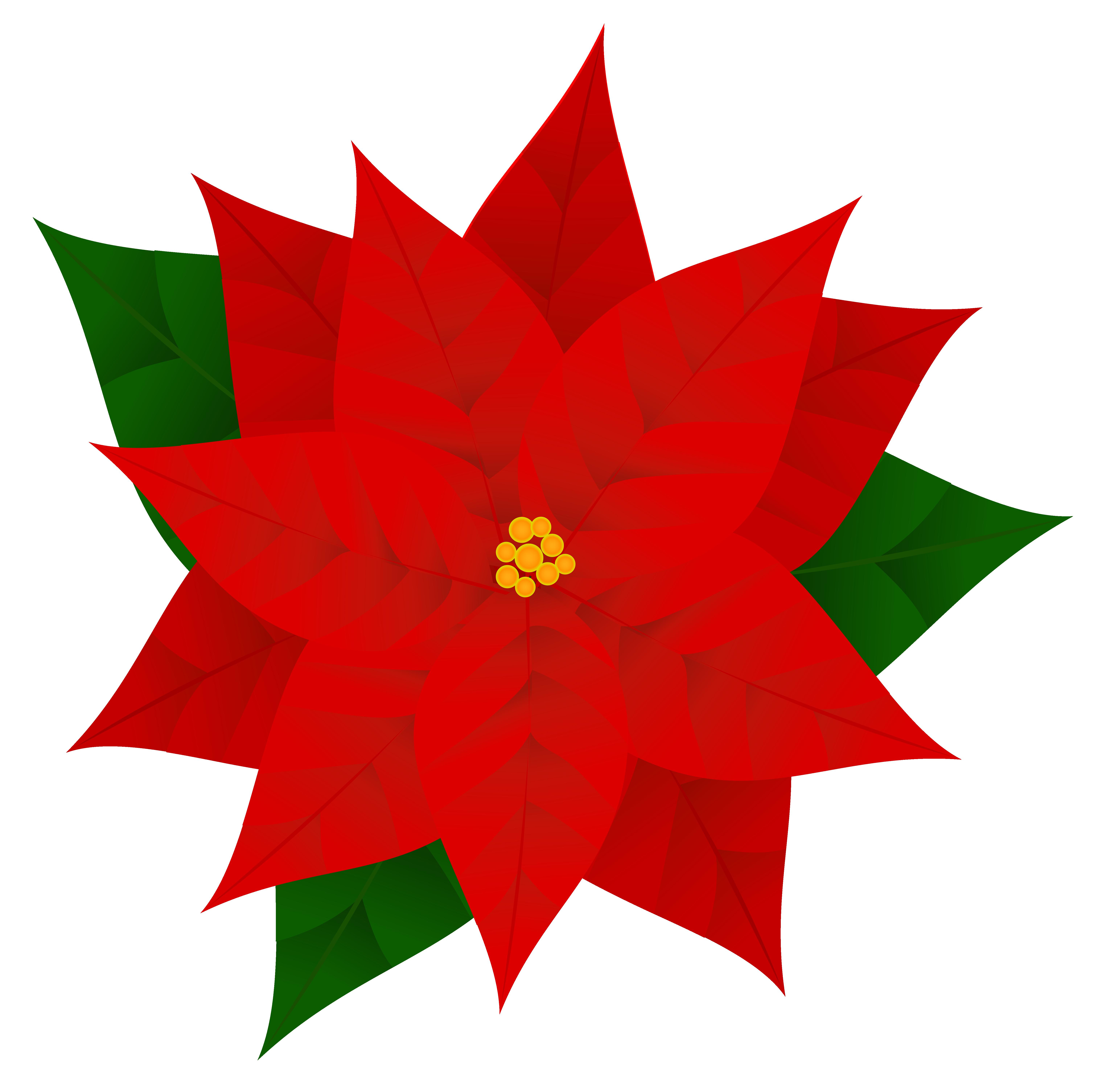 ... Poinsettias Clipart | Free Download Clip Art | Free Clip Art | on .