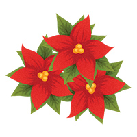 Poinsettias Clipart | Free .