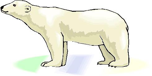 Polar bears clip art