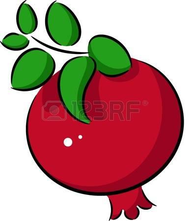 pomegranate: Illustration of ripe pomegranate fruit, isolated