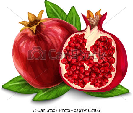 ... Pomegranate isolated poster or emblem - Natural organic.