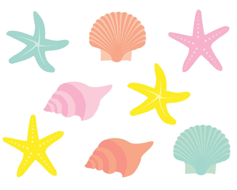 Popular Items For Seashell Clipart On Etsy