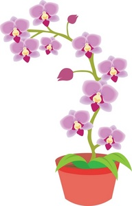 Potted Orchid Clipart