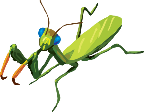 Praying Mantis Clip Art Praying Mantis Clip Art 14 Jpg