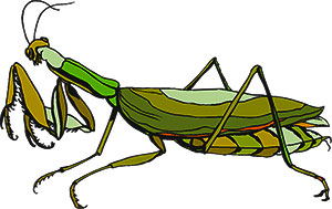 praying mantis clipart #13