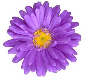 Pretty Purple Flower Clip Art-Pretty Purple Flower Clip Art-6