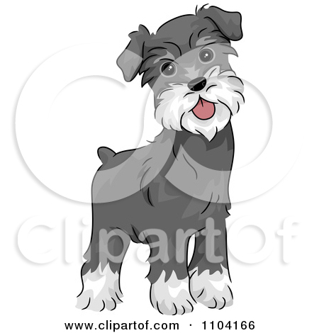 Image result for schnauzer si