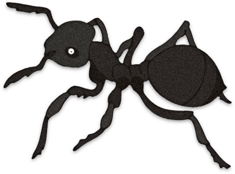Print version of black ant.