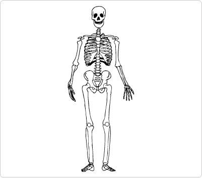 Free skeleton clipart public