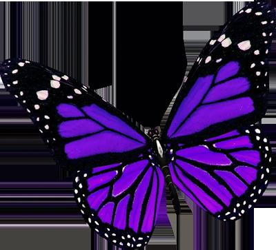 Purple Butterfly Clip Art-purple butterfly clip art-13