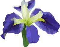 Purple Iris Clip Art-Purple Iris Clip Art-14