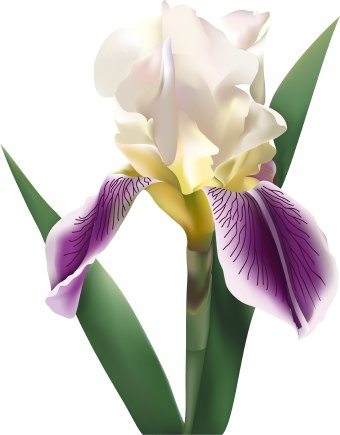 Purple Iris Flower Clip Art-Purple Iris Flower Clip Art-16