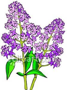Purple Lilac Flowers Royalty Free Clipart Picture