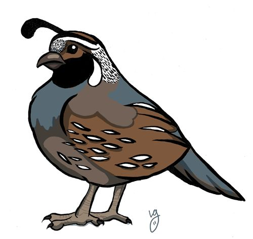 Quails, Clip art and .-Quails, Clip art and .-9