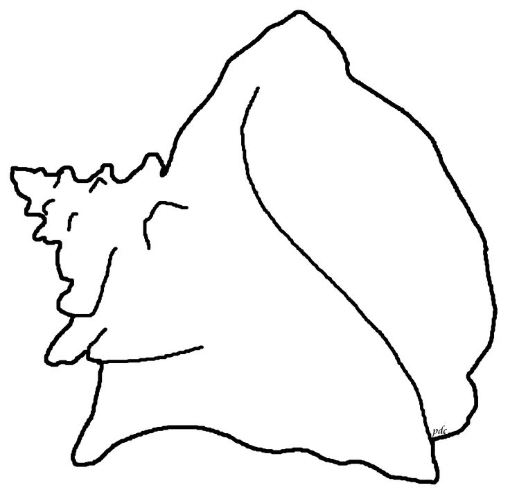 Queen Conch Shell Clipart #1