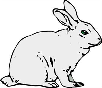 rabbit-1-rabbit-1-2